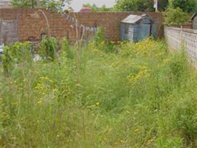 gardens-full-of-weedsnice