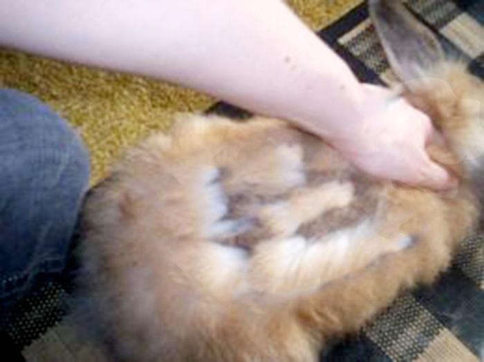 angora-farmed-rabbitseditedbyag