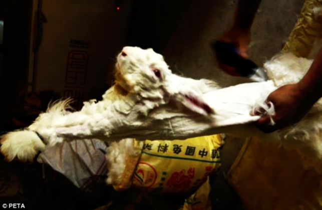 Rabbit Farm Cruelty