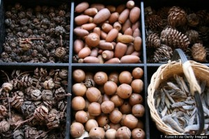 o-ACORNS-AND-PINE-NUTS-570