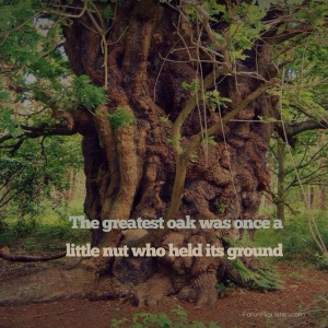 The greatest oak