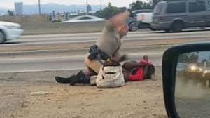 White California Highway Patrol Officer attacks and pummelled a black woman in the face