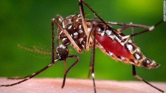 Zika Virus Targets TheFetus
